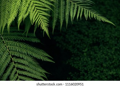 Freshness Green leaf of Fern, Place for text