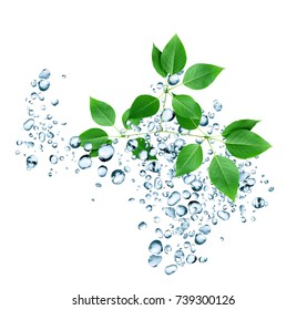 Freshness green leaves with water drops on white background