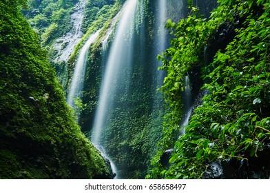 Freshness green nature and water flowing from cliff in Madakaripura Waterfall East Java island Indonesia