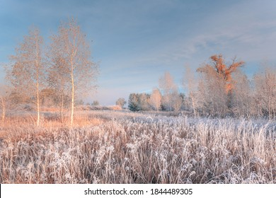 Freshness of November dreamy frosty morning. Beautiful autumn misty cold sunrise landscape. Fog and hoary frost at scenic high grass meadow.
