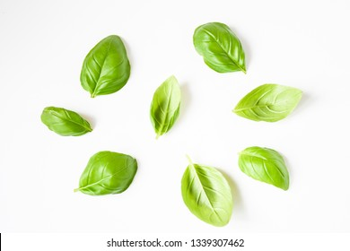 Freshness plant basil or Italy  basil with green narrow leaves ,plant in garden, often use in south east asia kitchen,  aroma and decoration in plate, herbe plant concept.