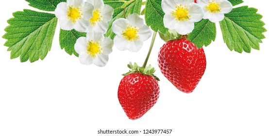 freshness red tasty strawberries