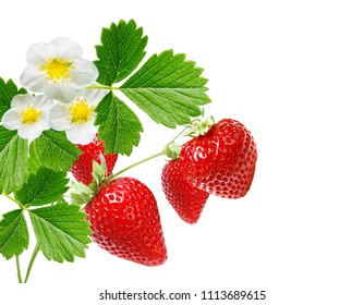 freshness ripe strawberries on white