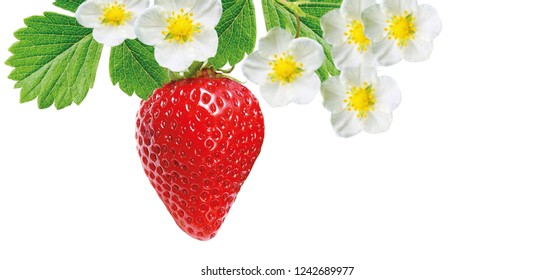 freshness ripe strawberry on white