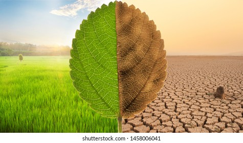 Freshness scene of Green meadow fields with beautiful sunset and Despair of Dry cracked earth with dead tree and polluted environment metaphor Ecology, earth day, Nature disaster and Climate change