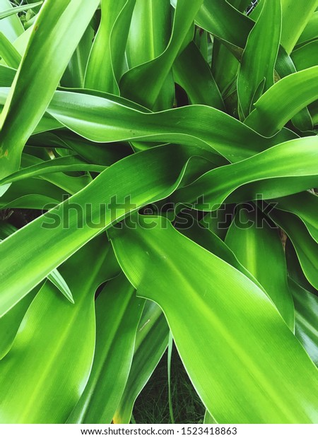 Freshness of vivid green colored leaves.
