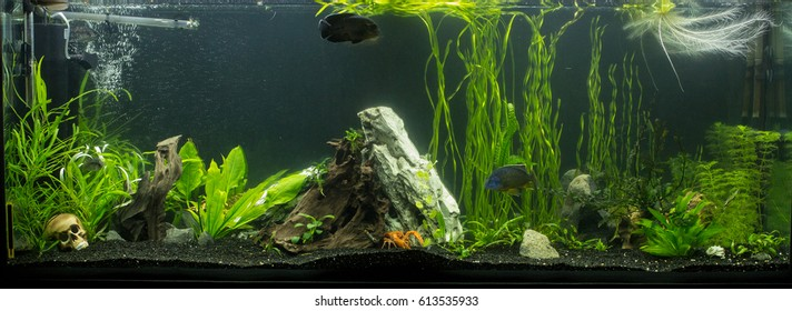 freshwater aquarium, crayfish in the aquarium, large aquarium with fish and plants, driftwood, aquarium
