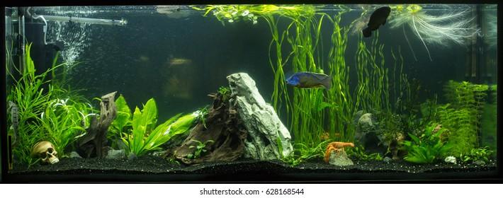 freshwater aquarium, crayfish in the aquarium, large aquarium with fish and plants, driftwood, aquarium