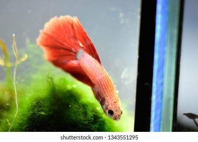 Exotic Freshwater Fish Images, Stock Photos & Vectors