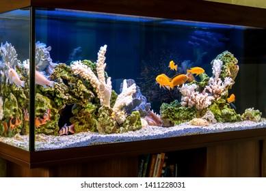 Malawi Aquarium Hd Stock Images Shutterstock