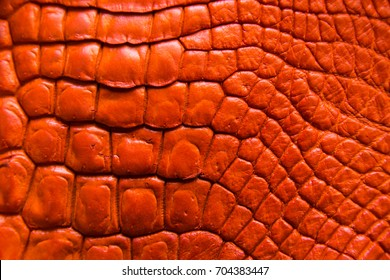 "Freshwater crocodile belly skin texture background. This image of Freshwater Crocodile ""Crocodylus siamensis"".This skin is very classic and beauty."