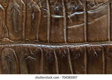 """Freshwater crocodile belly skin texture background. This image of Freshwater Crocodile """"Crocodylus siamensis"""".This skin is very classic and beauty."""