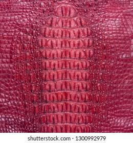 Freshwater crocodile bone skin texture
