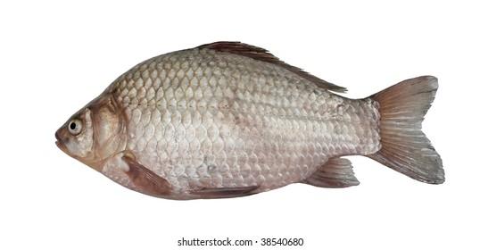 Freshwater fish (Carassius auratus gibelio)