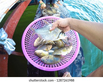 Freshwater fish caught by fishing