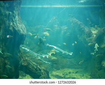 Freshwater fishes swimming in an aquarium, including carps, sturgeons, and common rudds in front of a background made from trees and stones.