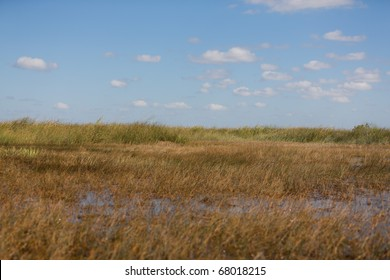 The freshwater prairies in the Everglades swamp in Florida
