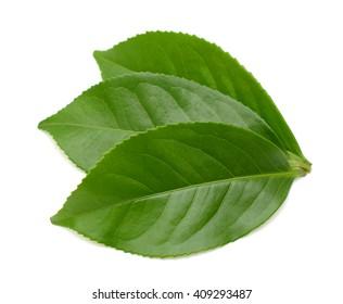 Fressh Green tea leaf isolated on white background