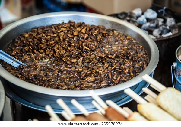 Fried beetles or insects traditional exotic korean or asian food in metal or aluminium dish or pan. Selective focuf of image