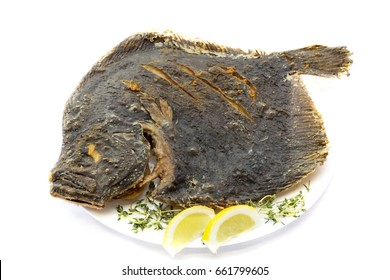 Fried flat fish/kalkan fish, isolated on white. Top view