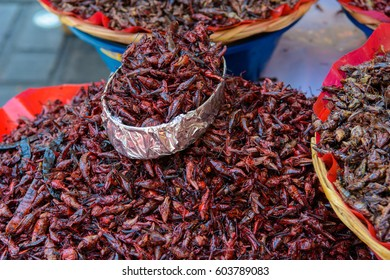Fried grasshopper, mexican snack