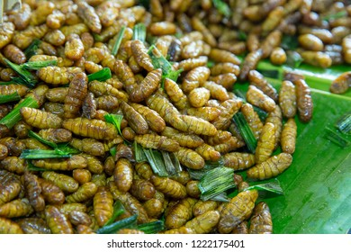 Fried Insect, pupae the food very famous, street food in Thailand