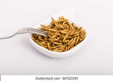 Fried insects, molitors