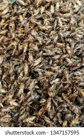 Fried insects that are sold
