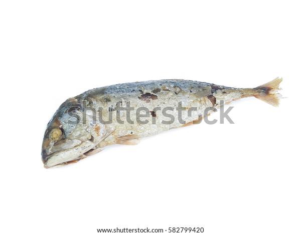 Fried Mackerel fish isolated on white background