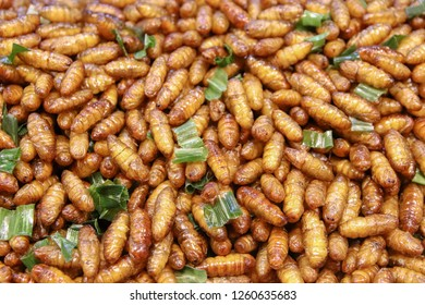 Fried pupa on street food in thailand