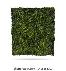 Fried seaweed sheet isolated on white background. Nori dry seaweed with snack. ( Clipping path )