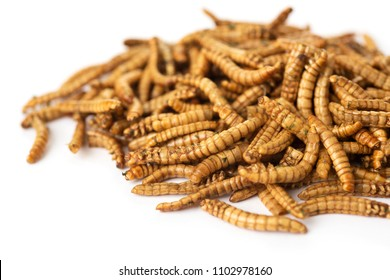 fried worms seasoned with garlic and herbs, on a white background