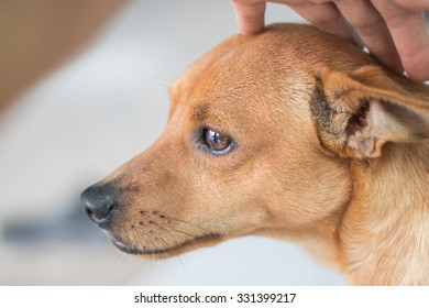 A friend dog.Friends, dogs are the most loyal of humans.