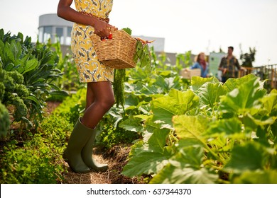 Friendly african american woman harvesting fresh vegetables from the rooftop greenhouse garden