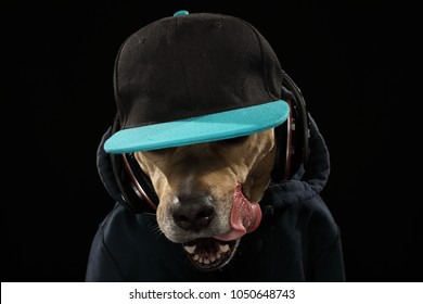 Friendly American Staffordshire terrier in headphone and cool blazer jacket like rapper isolated on black background