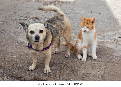 Friendly cat and dog on the street