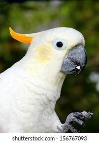 Friendly Cockatoo who may be willing to share some of his snack..