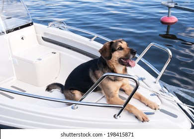 Friendly dog on the foredeck of a small motor boat