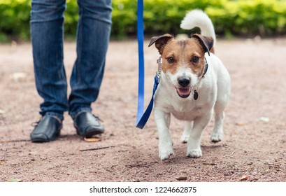 Friendly dog on leash at walkies exercises footwork with handler