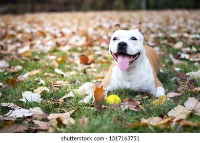 Friendly dog smile