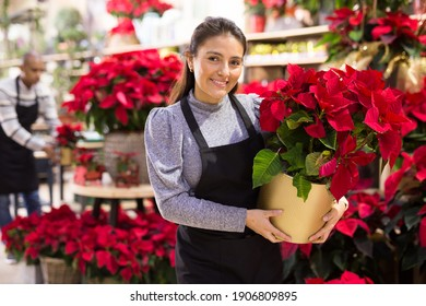 Friendly female flower shop owner offering blooming potted plants Poinsettias pulcherrima for sale