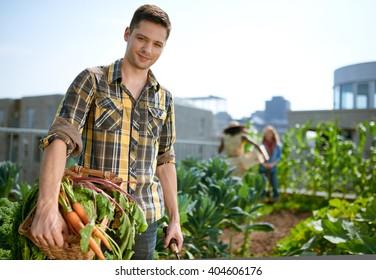 Friendly man harvesting fresh vegetables from the rooftop greenhouse garden
