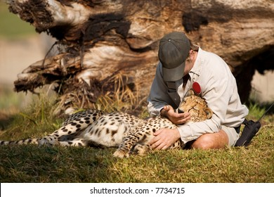 A friendly man petting a cheetah.