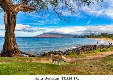 Friendly pet dog enjoying the scenic view from the beaches of Maui, Hawaii