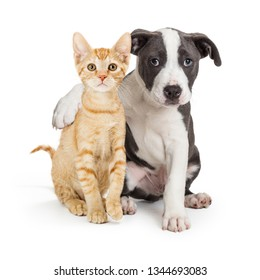 Friendly puppy with arm around cute kitten. Isolated on white.