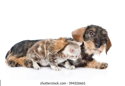Friendly puppy hugging a kitten. isolated on white background