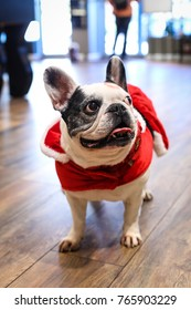 A friendly purebred pug dog dressed up in a Santa Claus outfit to spread holiday cheer.