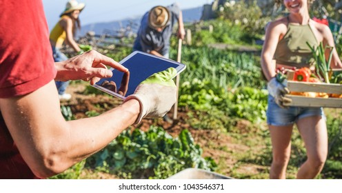 Friendly team harvesting fresh vegetables from the community greenhouse garden and planning harvest season on a digital tablet - Focus on man hands - Healthy lifestyle and organic products concept