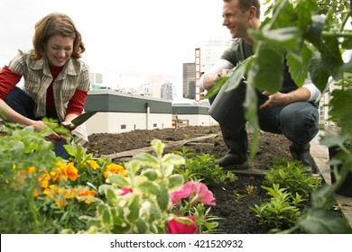 Friendly team harvesting fresh vegetables from the rooftop greenhouse garden and planning harvest season