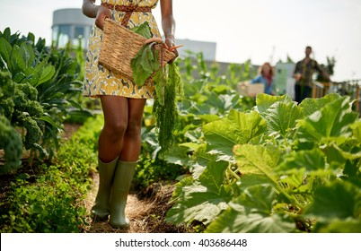 Friendly woman harvesting fresh vegetables from the rooftop greenhouse garden